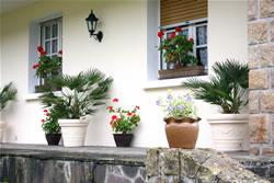 herbstliche k belbepflanzung im herbst und winter. Black Bedroom Furniture Sets. Home Design Ideas