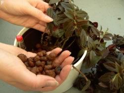hydrokultur pflanzen pflege anleitung und d ngen. Black Bedroom Furniture Sets. Home Design Ideas