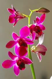 krankheiten an orchideen das hilft. Black Bedroom Furniture Sets. Home Design Ideas