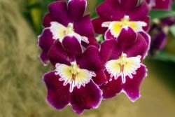 orchideen umpflanzen umsetzen anleitung. Black Bedroom Furniture Sets. Home Design Ideas